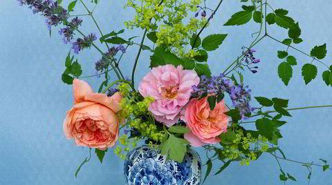 Godt&blandet. Roser og klematis trives godt sammen både i hagen og i vase. Klematisgrønt sammen med stormarikåpe og rosene Summer Song, Distant Drums og Emelie.