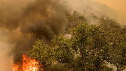 Brannfolk gjør sitt ytterste i møtet med flammene og røyken i Carmel Valley. Omfanget og spredningen på brannene har ført til akutt mangel på brannmannskap.