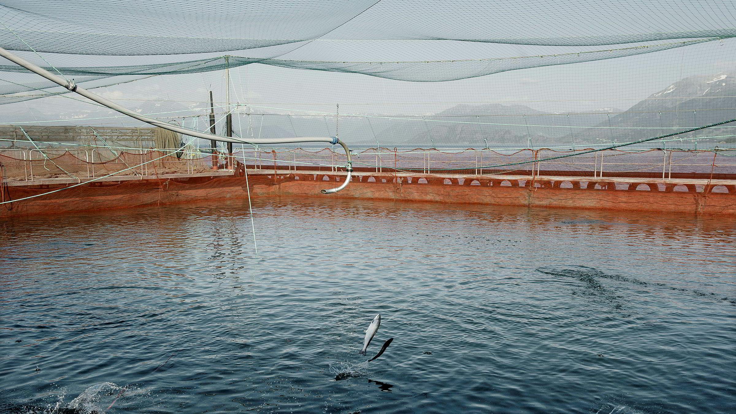 Noen hevder at fiskeoppdrett ikke er en «gave» fra naturen på samme måte som olje/gass, vannkraft og villfisk. Vi er delvis uenige i det, skriver artikkelforfatterne. Her fra lakseoppdrett på Onarøy.