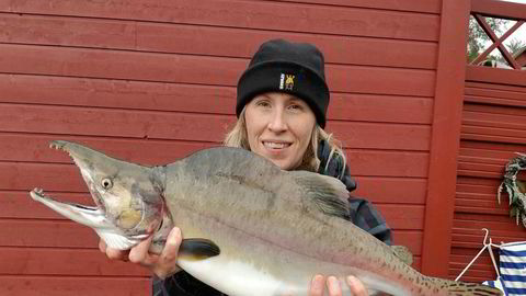 Mer enn ti tonn pukkellaks ble fisket i lakseelvene i Finnmark i fjor. Josefine Bergs på Nibios forskningssenter på Svanhovd i Øst-Finnmark viser frem noe av fangsten.