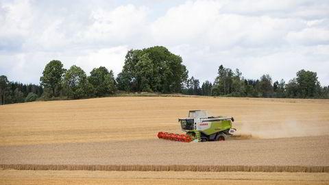 En skurtresker på et jorde mellom Ås og Ski i Akershus, i august 2014. Gode kornavlinger bidro til inntektsvekst for bøndene i fjor. Foto: Audun Braastad /