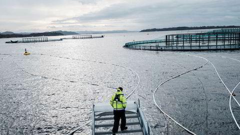 Hele 783.000 laks forsvant fra Mowis fiskemerder i 2018. Det er 34 ganger så mange laks som året før, og 61 ganger så mange som i 2016. Her fra Mowis anlegg på Finnøy i Rogaland.
