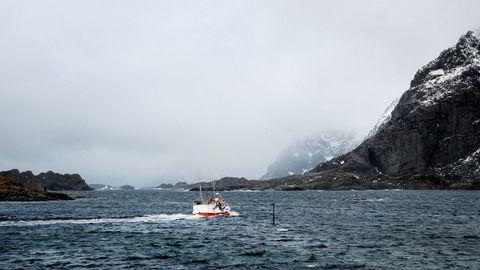 Et stort antall lokallag og fylkeslag i Arbeiderpartiet har vedtatt uttalelser om et oljefritt Lofoten og Vesterålen. Her fra Henningsvær i Lofoten.