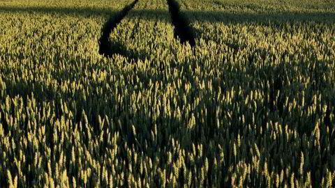 Jordblindhet rammer også landbruket selv. Nedbygging til landbruksformål utgjør om lag 22 prosent av det jordbruksarealet som bygges ned, skriver forfatteren.