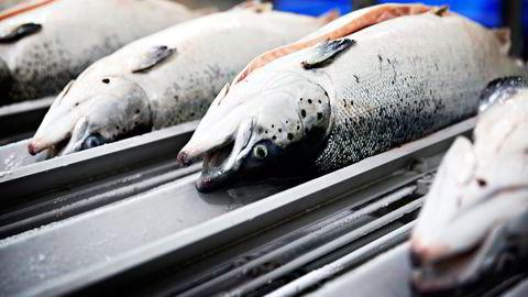 «Restråstoffene må utnyttes enda bedre, og den marine sektoren er allerede godt igang», skriver artikkelforfatteren. Foto: Marthe Christensen/