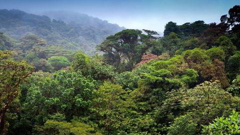 Det kan virke som et mysterium at de rike i nord ikke betaler massivt for å bevare regnskogen i sør. Her regnskogen i Costa Rica. Foto: Istock