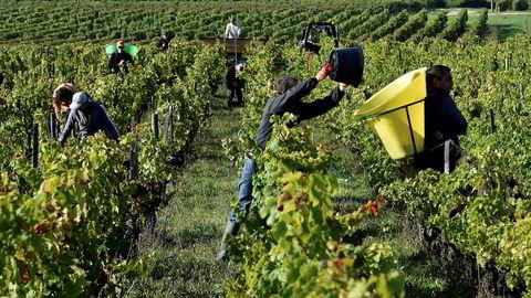 Den norske vinimportøren ønsker å selge folkelig vin fra Bordeaux.