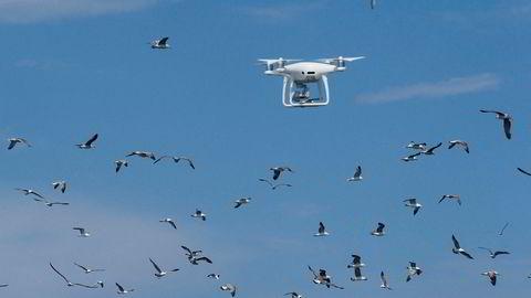 Denne dronen ble fotografert i Frankrike i mai, da den ble brukt av ingeniører i forbindelse med planleggingen av en vindmøllepark.