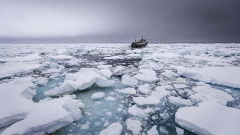 Isfront. Da den etterlyste tråleren «Thunder» ble oppdaget i Sørishavet 17. desember, flyktet den gjennom pakkis og piskende stormer. Men hvem er det som fører fartøyet? Hvem er offiserene ombord? Hvem tar de ordre fra? Hvem er de hemmelige eierne? Foto: Simon Ager / Sea Shepherd Global