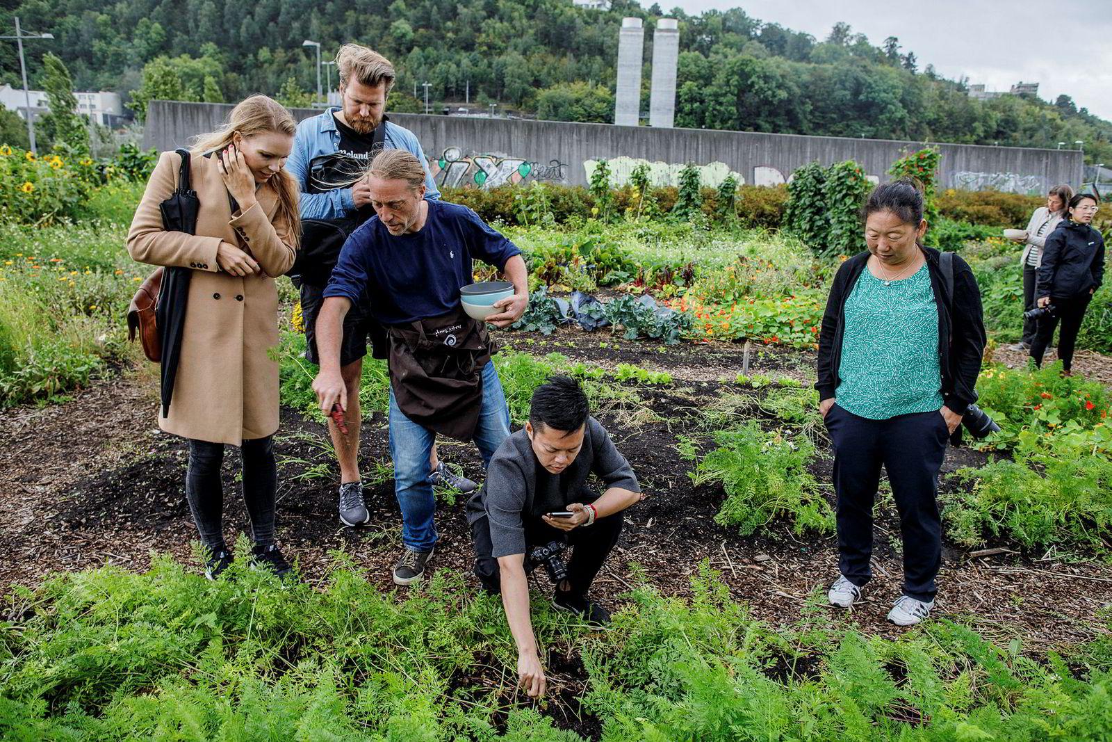 På økogården Losæter i Oslo plukker Hedda Kaupang, Anders Husa, Emmanuel Rang fra Åpent Bakeri, instagrammer Tun Shin Chang og journalist Tove Henckel spiselige blomster.