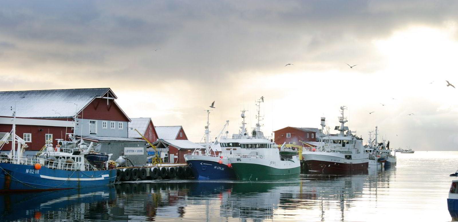 EKSPORTER MEST TIL RUSSLAND. 30 til 40 prosent av Lofoten Vikings fisk går til Russland.