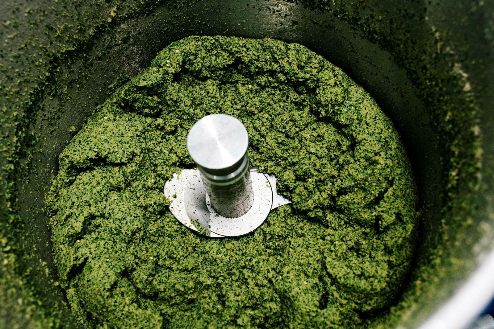 Kaffirlime, chili og ingefær eltes sammen i en kjøkkenmaskin før den skal kokes ut med kokosmelk.