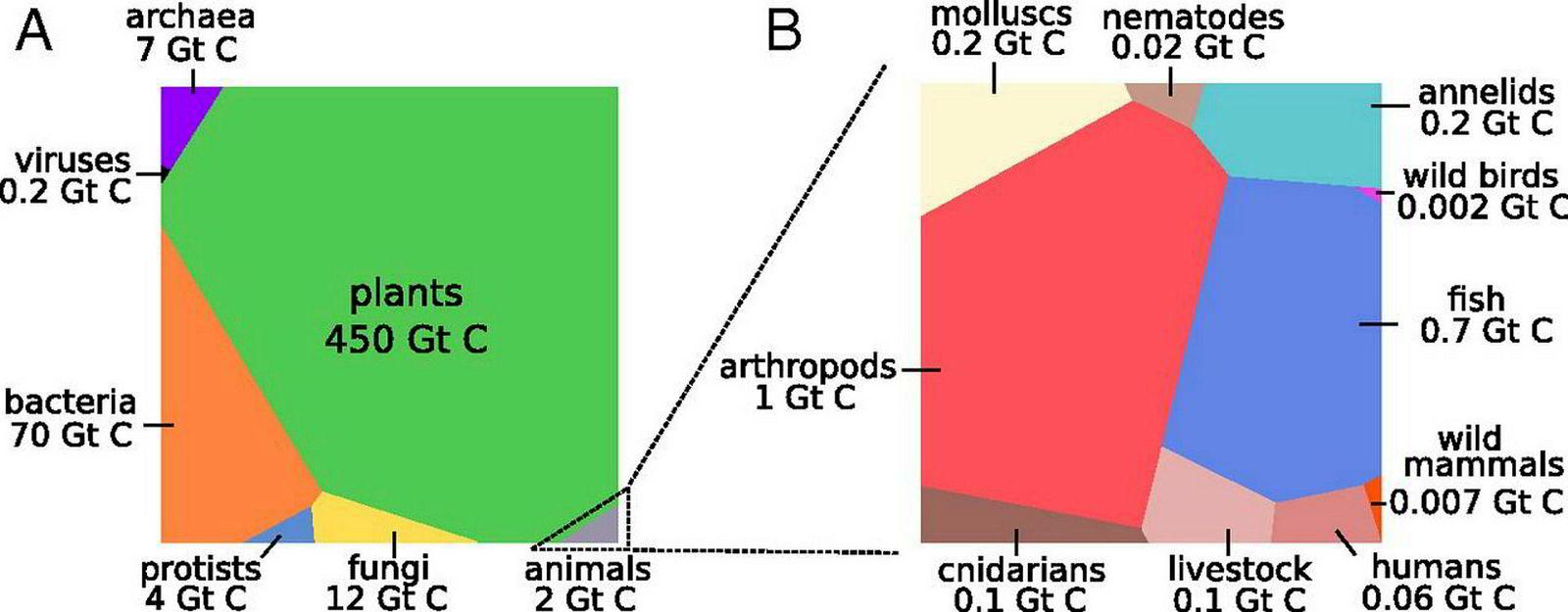 . Biomasse for alle livsformer på jorden.