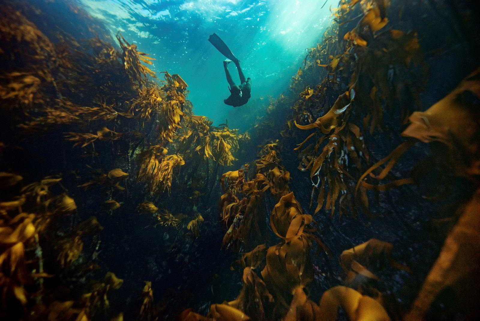 Ørjan Dyrnes fridykker gjennom en kløft i farvannet utenfor Kristiansund.