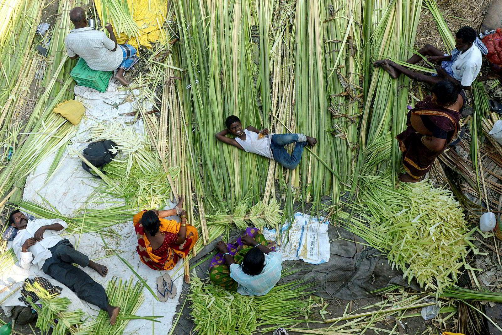 Selgere samler kokosnøtt blader som skal selges under hinduenes Durga Puja festivalen i Chennai, India. Den fem dager lange festivalen som markerer det godes seier over det onde.