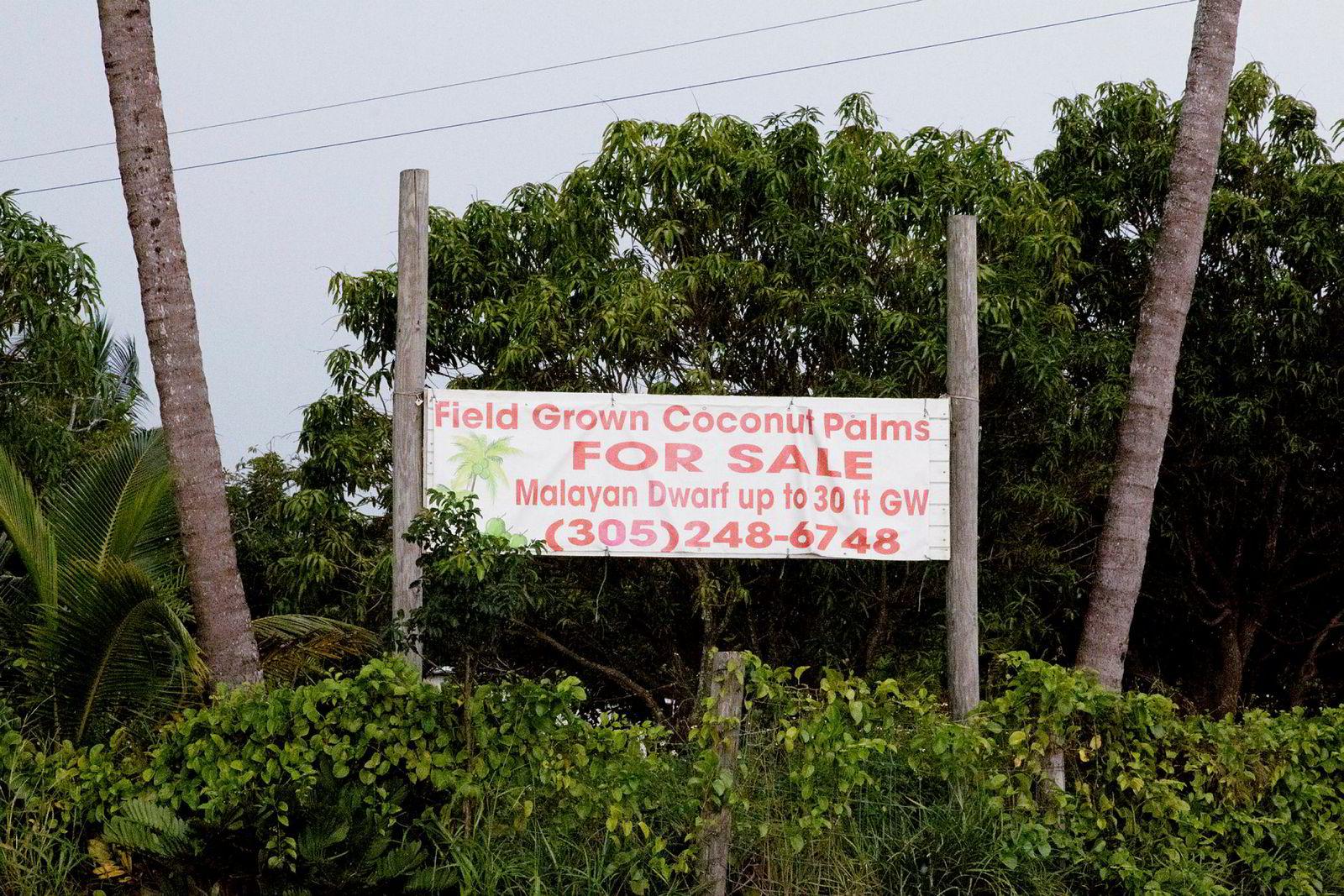 Det er mange nedlagte kokosnøttplantasjer og andre jordbruksområder til salgs på sydspissen av Florida. Atlantic Sapphire betalte fire millioner dollar for 350 mål jord.