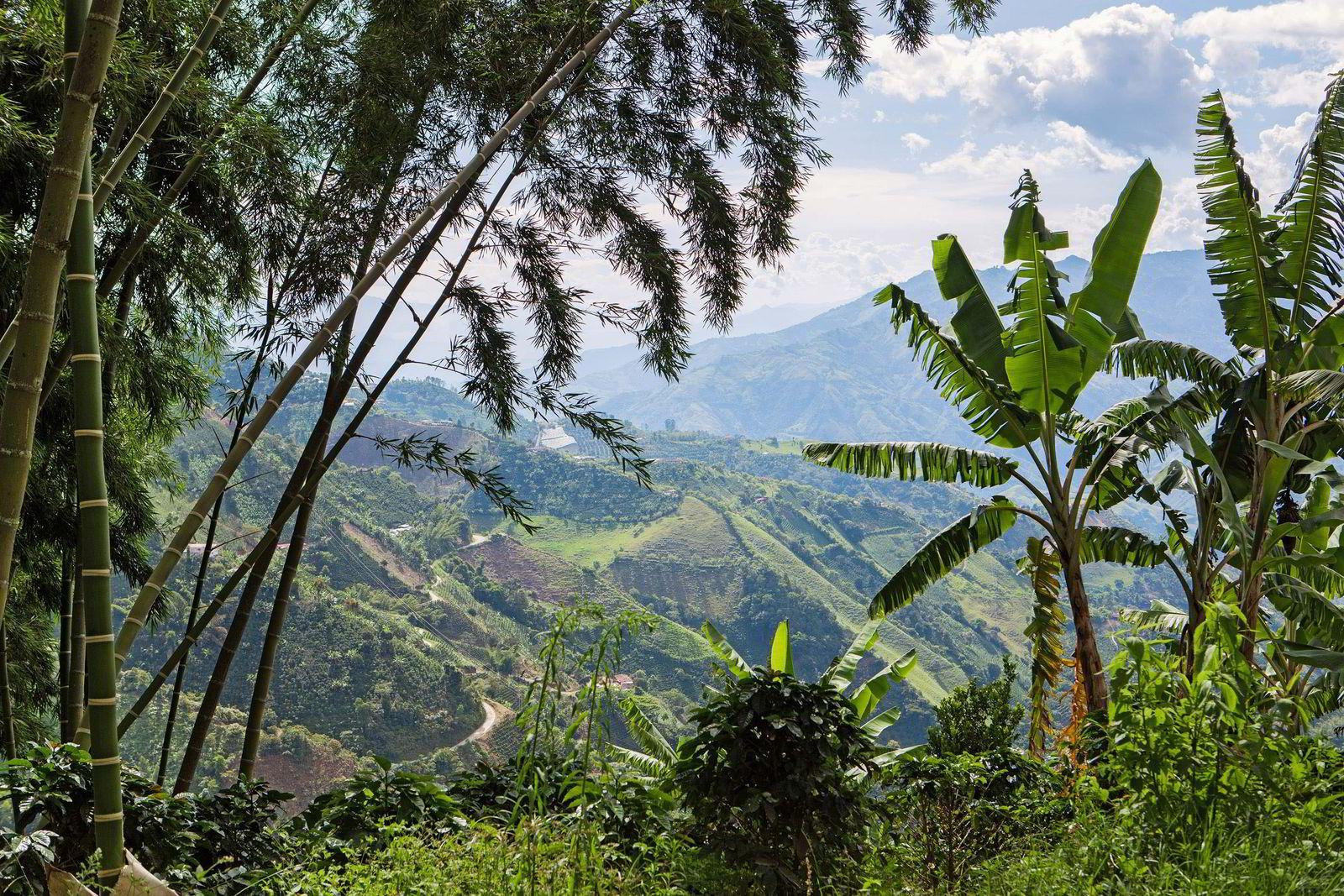 Som en del av Nespresso AAA Sustainable Quality™»-programmet ble det derfor i 2010 åpnet en kaffemølle utenfor Jardín i Colombia, som forvaltes av det lokale Andes-samarbeidet. Foto: