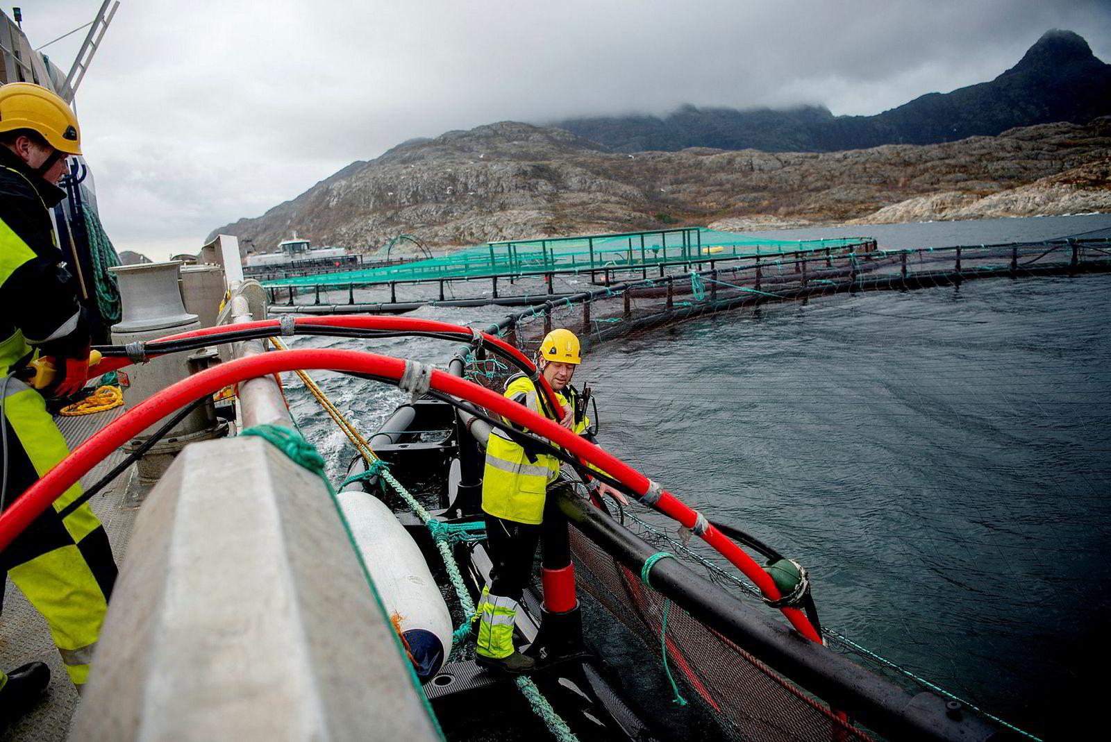 Driftsoperatør Mattias Bårnes (til venstre) og driftsoperatør Stig Edvardsen renser oppdrettsmerdene til Lofoten Sjøprodukter utenfor Bodø.