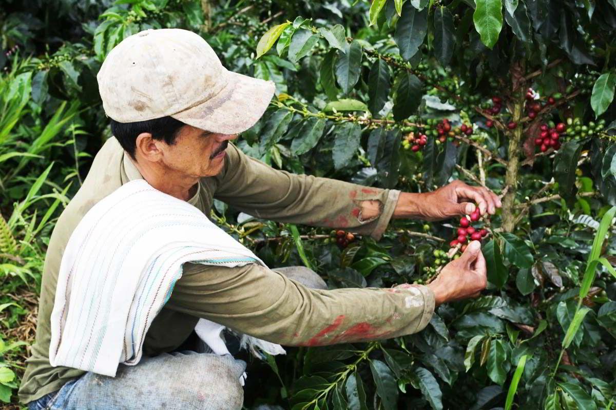Området utenfor Jardín i Colombia er i dag et frodig landskap. Slik har det ikke alltid vært, forteller kaffebonden Humberto Galeano.