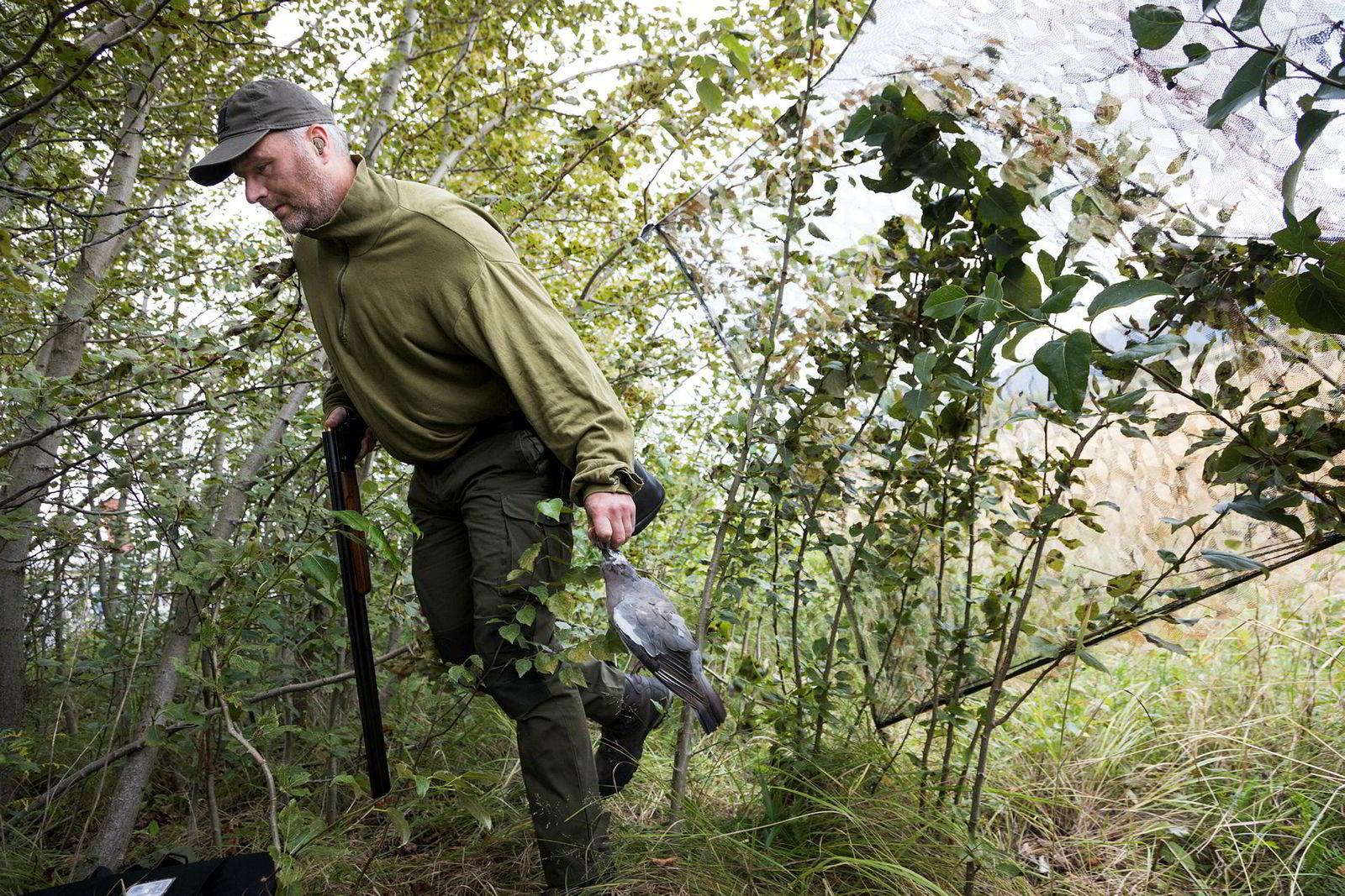 Elling Tryterud bærer inn dagens første due inn bak kamuflasjenettet i kanten av åkeren.