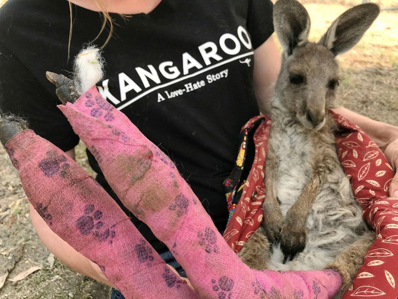 Frivillige jobber på spreng for å redde de menge tusen dyrene som er rammet av skogbrannene. Denne kenguruen er blitt behandlet for brannsår på føttene som den fikk etter å ha hoppet gjennom brennende gress for å unnslippe flammehavet i skogen.