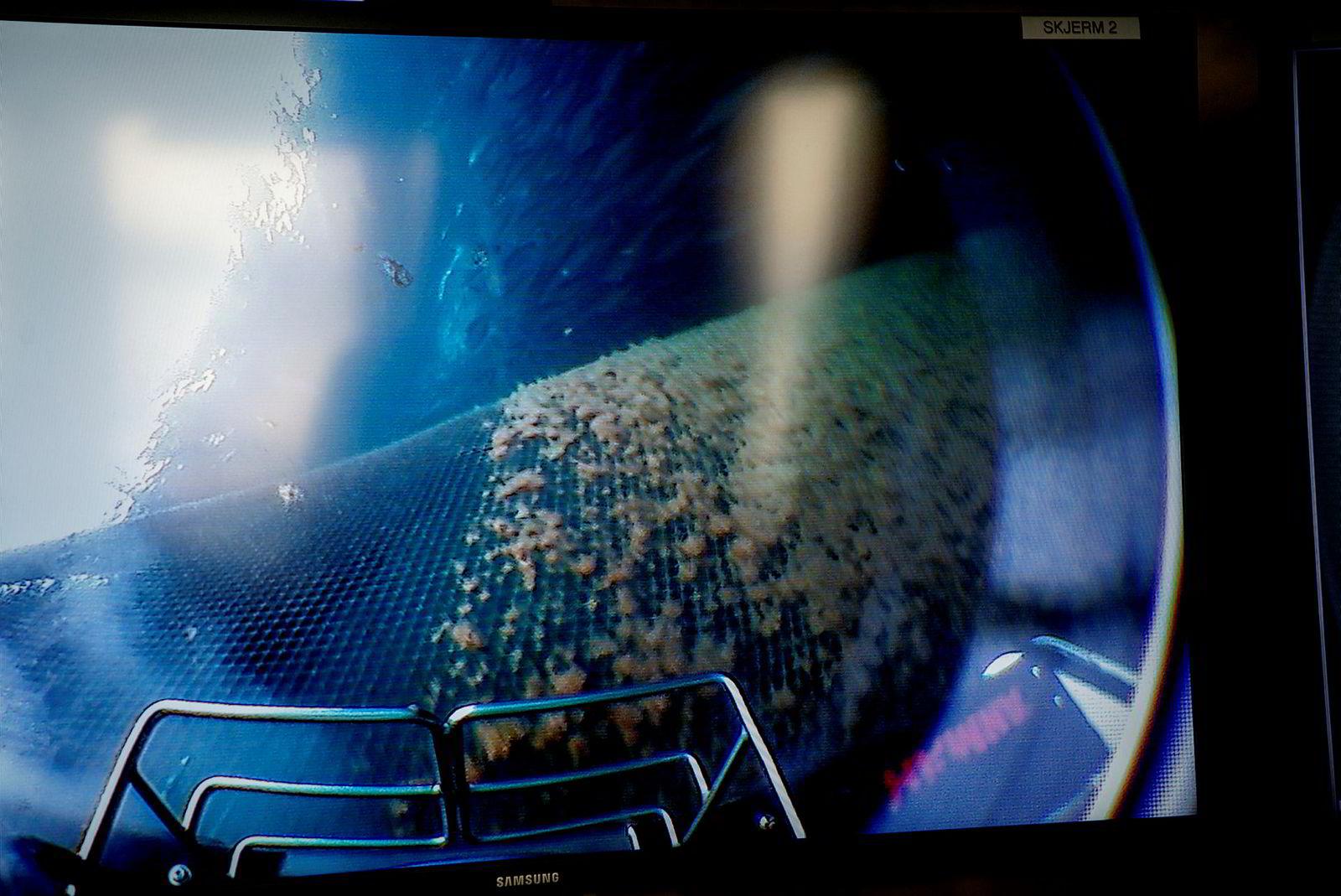 Kamera viser rensingen av nøter.