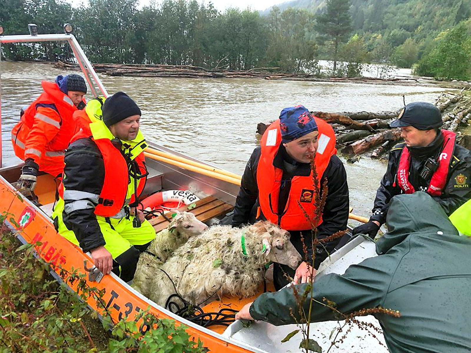 16. september måtte flere sauer reddes fra vannmassene da elven Surna i Møre og Romsdal gikk over sine bredder. 100 sauer og flere kyr ble tatt av vannet.
