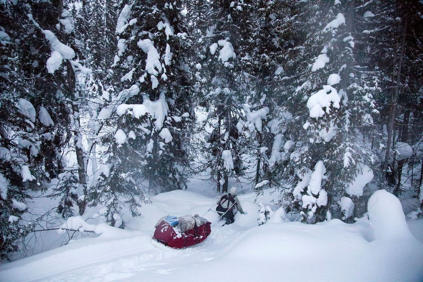 Med pulken på slep brøyter Bodil Gilje seg gjennom skog og usporet snø for å finne sin favoritteltplass. Bodil Gilje stikker mer enn gjerne ut i vinterkulden for å overnatte i soveposen.