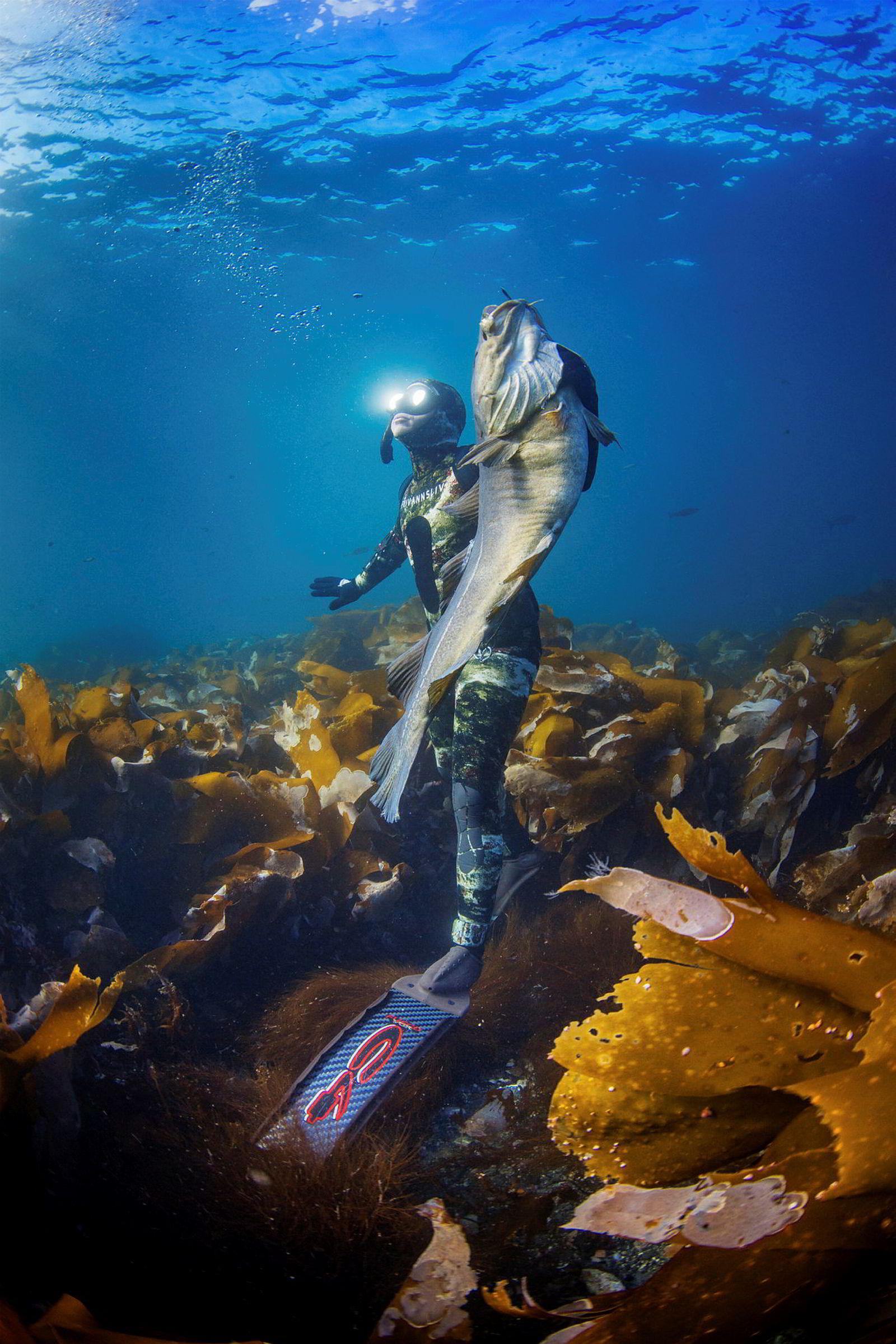 Michael Byø med en nyskutt monstertorsk i Saltstraumen, verdens sterkeste tidevannstrøm.