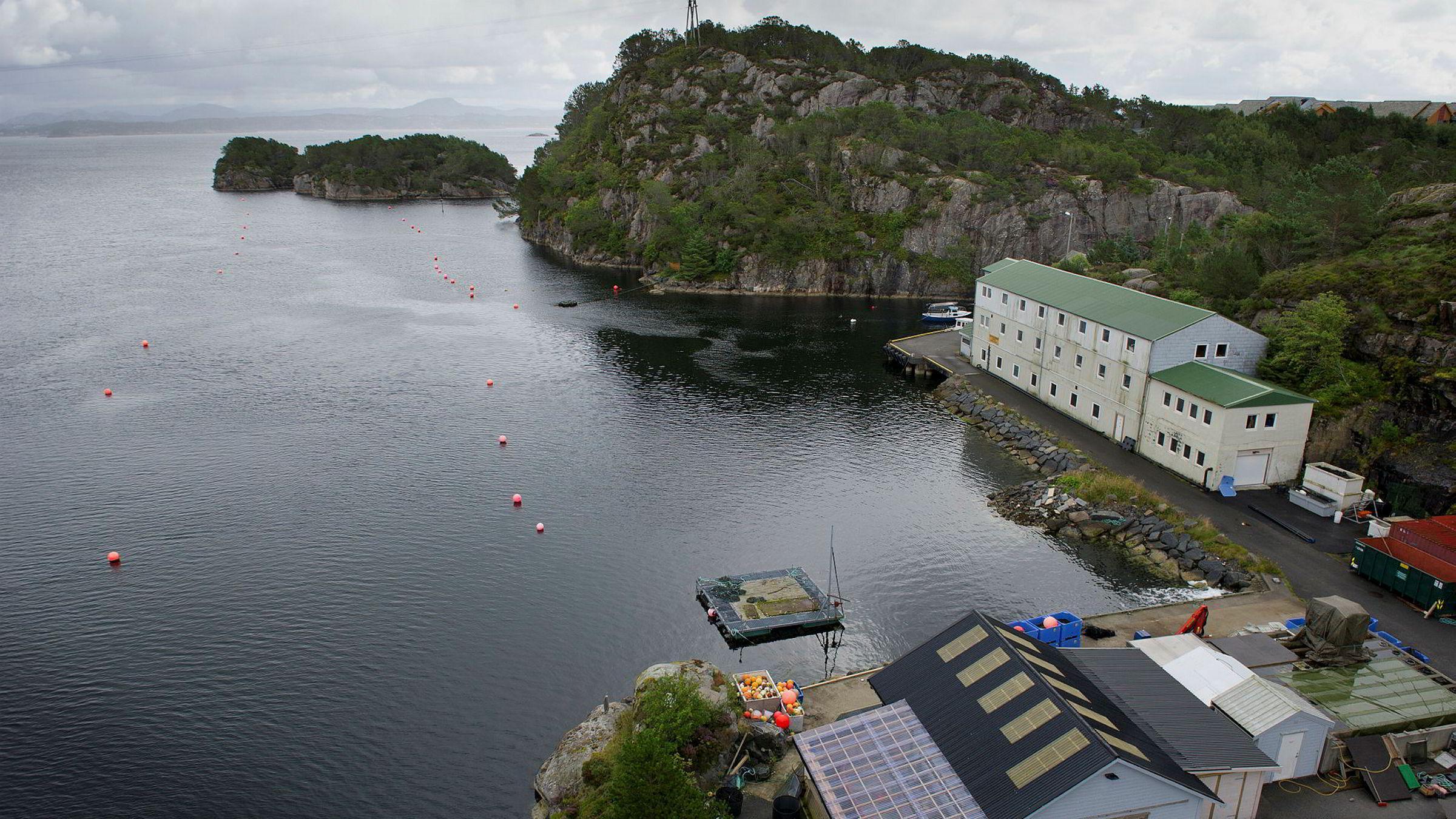 I Øygarden utenfor Bergen er dyrkingen av sjøpunger i gang.En del av «Project Ocean» går ut på å bruke sjøpunger til å rense havet og samtidig produsere fôr til fiskeoppdrett.