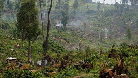 Mange planter i Afrika risikerer å bli utryddet. Bildet er fra et skogområde i Kongo.