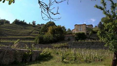 Ch. Grillet i Rhône er den eneste av sitt slag i hele Frankrike.