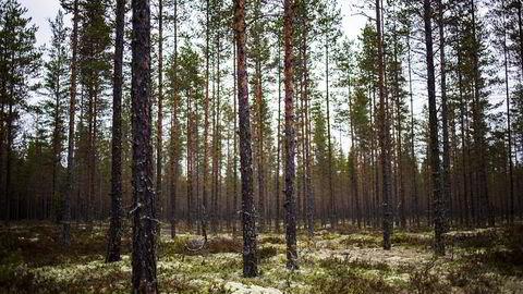 Norge gror igjen av grønn energi mens vi importerer ved, skriver artikkelforfatteren.