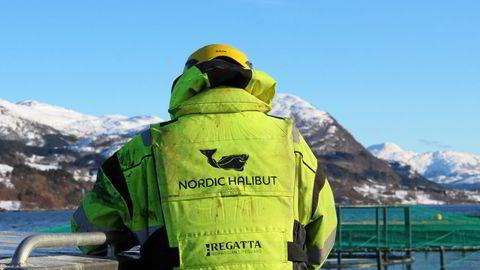 Nordic Halibut melder at de går på børs med ny kapital til produksjon av oppdrettskveite
