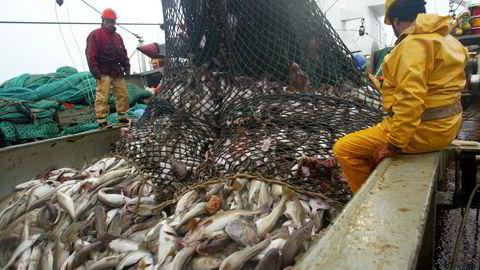 Franske fiskere med torsk i arktisk farvann. Nå setter EU kvoter utenfor Svalbard på egen hånd.