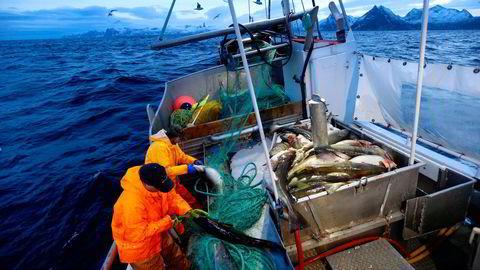 Den britiske havgående flåten er helt avhengig av torskekvoter i norske farvann. Norge og Storbritannia er nå helt i sluttfasen av forhandlingene om en ny fiskeriavtale og en ny frihandelsavtale.