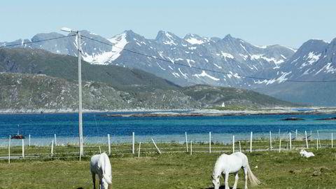Hester beiter på Sommarøy. I hvilket fylke ligger øya?