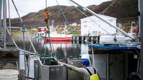 Fisker Johnny Johansen leverer fisk på fiskebruket Nergård Breivikbotn på Sørøya i Finnmark.