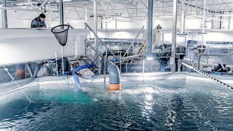 Akva Group leverer blant annet utstyr til settefiskproduksjon. Her fra Tytlandsvik Aqua i Ryfylke.