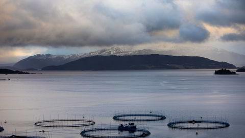 Vi vil stille krav til næringslivet. For sjømatnæringen handler dette blant annet om krav til lokale ringvirkninger, skriver innleggsforfatteren.