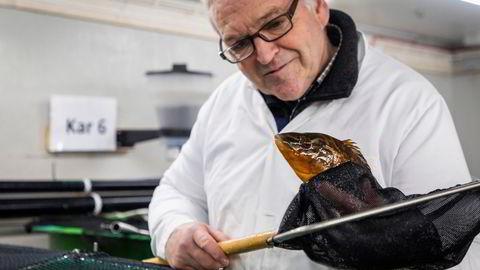 Det var jubel hos Skjerneset fisk da gründer Geir Ketil Otterlei og resten av teamet lyktes med oppdrett av berggylte. Dermed kan firmaet ta et stort steg videre etter å ha bygget seg opp på befruktede egg fra rognkjeks de siste årene.