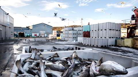 Flere hundre tusen tonn torsk skal landes på kort tid under vinterfisket. Det krever økt bemanning i fiskemottakene på land, hvor det vanligvis jobber mange utenlandske sesongarbeidere.