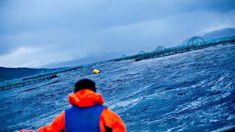 Lukkede merder har betydelig større utfordringer i bølger enn hva en åpen merd har, og disse utfordringene er ennå ikke helt løst, skriver Pål Lader.