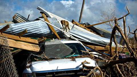 Sterke reaksjoner på Puerto Rico på at Trump truer med å kutte i hjelpen etter orkan som har rammet samfunnet hardt.