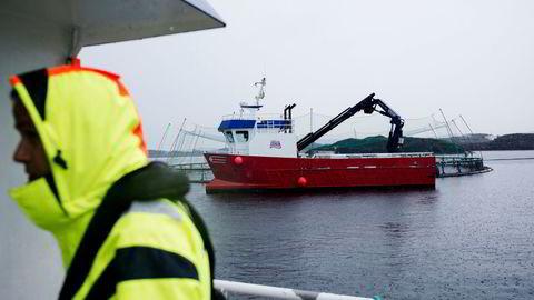 Lakseselskapet NTS varslet fredag morgen at det byr på Norway Royal Salmon. Analytiker mener budet ikke kommer til å få stor oppslutning blant aksjonærene.