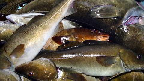 Norske milliardinntekter er mulig hvis EU sløyfer fisketollen.