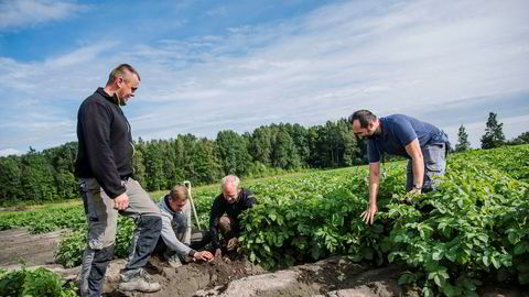 Bonde Åsmund Bjertnæs (nummer to fra høyre) opplever at veldig få norske ungdommer vil ta sesongarbeid på gården, mens utenlandske arbeidere, her ved polske Jarek Pieklik (fra venstre), Pawel Bednarski og Zbyszek Zawadzki, kommer igjen år etter år.