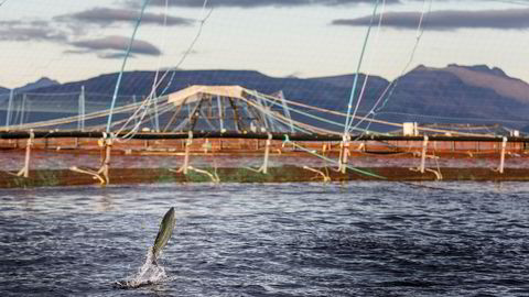 Norske fiskefôrprodusenter kjøper sertifisert soya som ikke skal komme fra nylig avskogede områder, men så lenge fiskefôrprodusentene fortsetter å etterspørre soya fra en industri som er i ukontrollert og ekspansiv vekst, er ikke dette tilstrekkelig til å løse problemet, sier forfatteren.