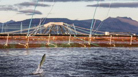 Det gikk trolig to døgn fra oppdrettsanlegget til Bolaks fikk en skade til rømmingen ble oppdaget, mener Fiskeridirektoratet.