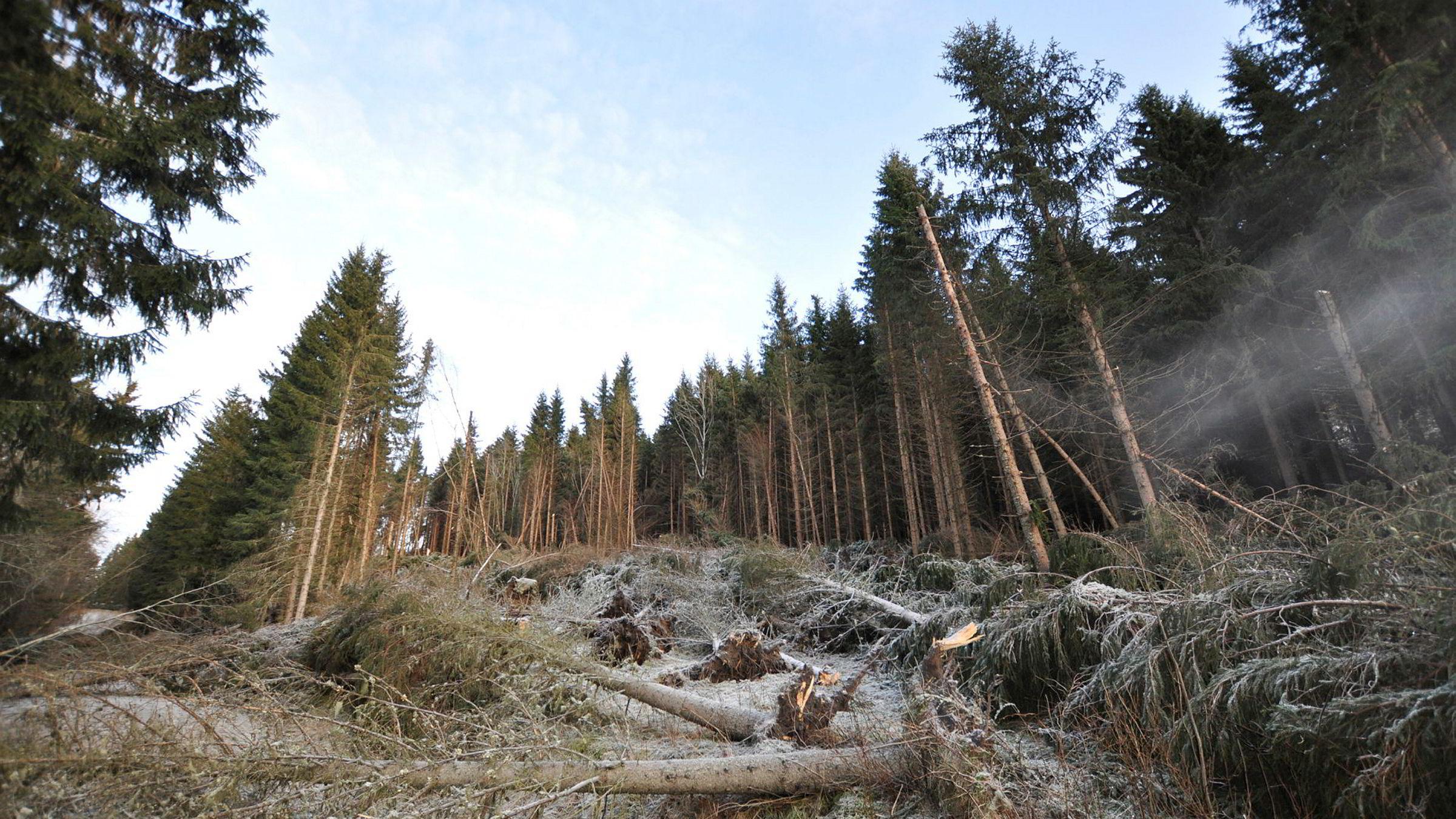 Holtsmark nevner at hvis «bioenergi ble laget av rester fra skogindustrien som ellers ikke ville hatt noen anvendelse, ville alt vært vel og bra.» I de norske biodieselprosjektene er det jo nettopp slikt avfall som skal brukes, skriver Bjørn Eidem i innlegget.